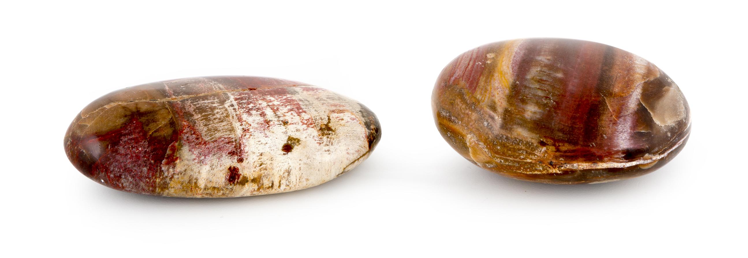 galet bois fossilisé